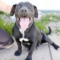 Adopt A Pet :: Cher - High River, AB