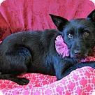 Adopt A Pet :: Kahlua