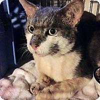Adopt A Pet :: Sawyer - East Brunswick, NJ