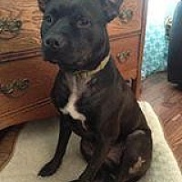 Adopt A Pet :: Braveheart- Smiles Forever Rescue - Fredericksburg, VA