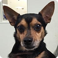 Adopt A Pet :: Boyd - Orlando, FL