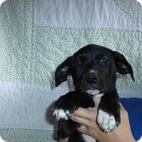 Adopt A Pet :: Kiwi - Oviedo, FL
