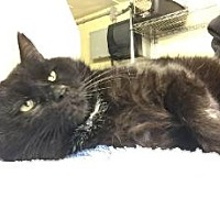 Adopt A Pet :: Mr. Goo - Brooklyn, NY