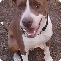 Adopt A Pet :: Lex - Broken Arrow, OK