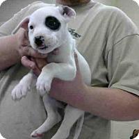 Adopt A Pet :: A272438 - Conroe, TX