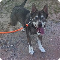 Adopt A Pet :: Hope - Plano, TX