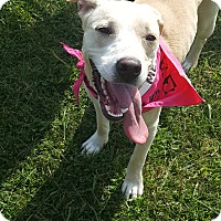 Adopt A Pet :: DeDe - Glastonbury, CT