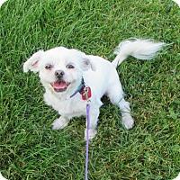 Adopt A Pet :: Bella - Mukwonago, WI