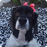 Adopt A Pet :: Penny - Santa Barbara, CA