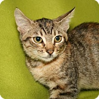 Adopt A Pet :: Queen of Hearts - Bradenton, FL