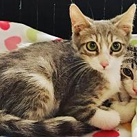 Adopt A Pet :: Steve - Phoenix, AZ