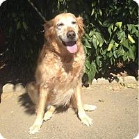 Adopt A Pet :: Carla - Temecula, CA