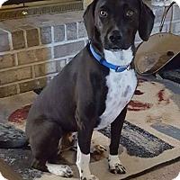 Adopt A Pet :: Dargan - Harrisburg, PA