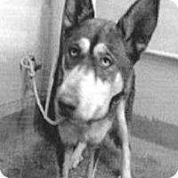 Adopt A Pet :: Aspen - Spokane, WA