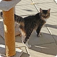 Adopt A Pet :: Duchess - Gardnerville, NV