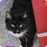 Adopt A Pet :: Vinny - Baton Rouge, LA