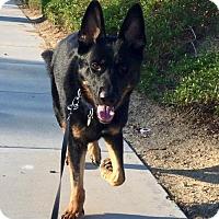 Adopt A Pet :: Sherman - San Diego, CA