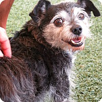 Adopt A Pet :: Buddy - Sweet Guy! - Los Angeles, CA