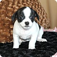 Adopt A Pet :: Clover - Temecula, CA