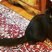 Adopt A Pet :: Rapunzel - Hainesville, IL