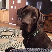 Adopt A Pet :: Smokey - Santa Clarita, CA