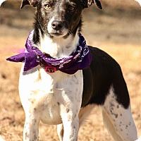Adopt A Pet :: Princess - Haggerstown, MD