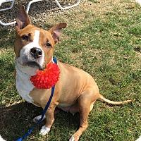 Adopt A Pet :: Bessie - Avon, OH