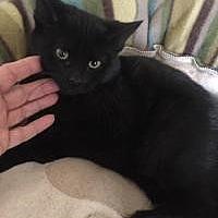 Adopt A Pet :: Nicholas - Medford, NJ