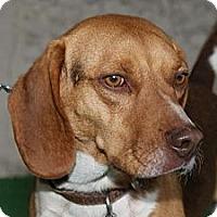 Adopt A Pet :: Hershey - Norman, OK