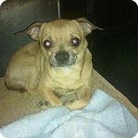 Adopt A Pet :: Haskal - Cumberland, MD
