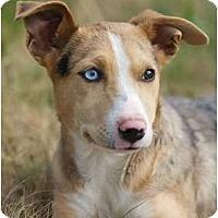 Adopt A Pet :: Kyra - Providence, RI