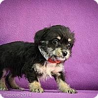 Adopt A Pet :: Ralf - Broomfield, CO