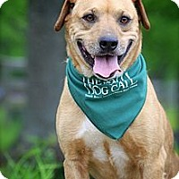 Adopt A Pet :: Vinnie - Flowery Branch, GA
