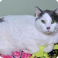 Adopt A Pet :: Rocky - Medina, OH