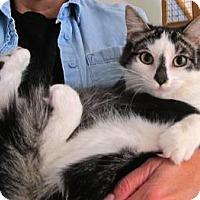Adopt A Pet :: Paris - Davis, CA