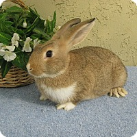 Adopt A Pet :: Patch - Bonita, CA