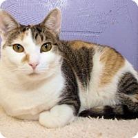 Adopt A Pet :: Allie - Cincinnati, OH