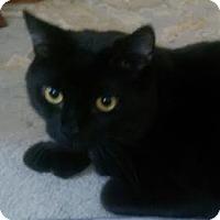Adopt A Pet :: Alvy - Toronto, ON