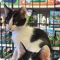 Adopt A Pet :: Mercy - Gilbert, AZ
