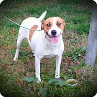 Adopt A Pet :: Mazie IN CT - East Hartford, CT