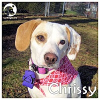 Adopt A Pet :: Chrissy - Novi, MI