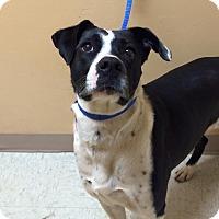 Adopt A Pet :: Mitzi - $25 - Woodward, OK