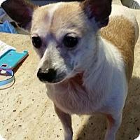 Adopt A Pet :: Gabbi - Alden, NY