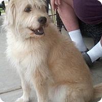 Adopt A Pet :: Socks - Adopted - Piqua, OH