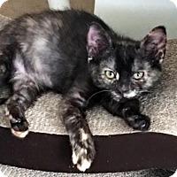 Adopt A Pet :: Penelopea - Austin, TX