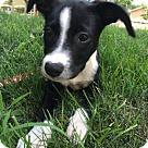 Adopt A Pet :: Fritter - Adoption Pending