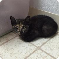Adopt A Pet :: Ellie - Bryan, OH