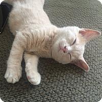 Adopt A Pet :: Bubbles - Toronto, ON