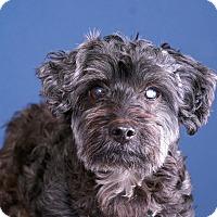 Adopt A Pet :: Trevor - Sudbury, MA