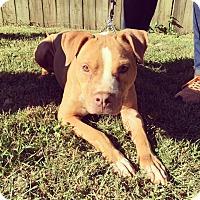 Adopt A Pet :: Brady - Atlanta, GA